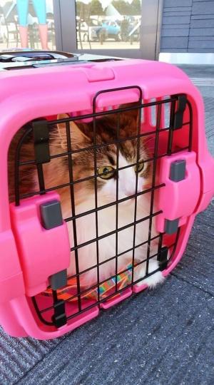 うちのネコさん「ハリー」 と、、 移動中。 (^ ^;